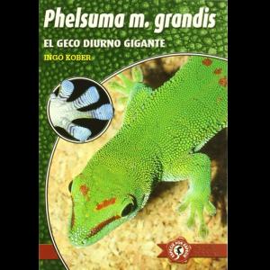 Phelsuma m grandis