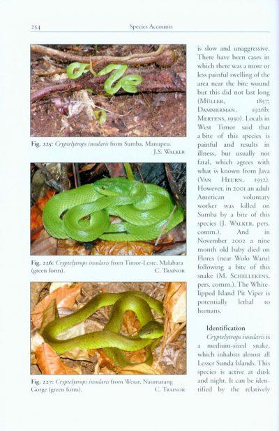 snakes lesser sunda